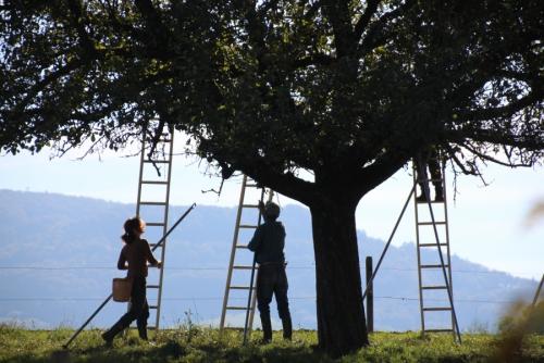 13.10.2019: Wo Bartli den Most holt und es in den Zwetschgenbäumen zwitschert
